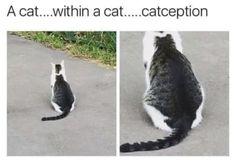 pet memes that make you LOL again and again - . - 100 pet memes that keep making you a LOL – pet memes that make you LOL again and again - . - 100 pet memes that keep making you a LOL – - Funny Animal Jokes, Funny Cat Memes, Really Funny Memes, Cute Funny Animals, Animal Memes, Cute Baby Animals, Funny Cute, Cute Cats, Animal Jokes