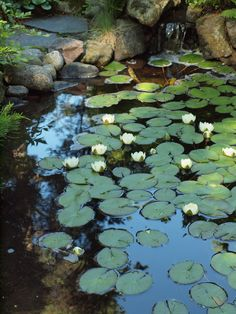 Japanese style garden in Finland, July 10th, 2017