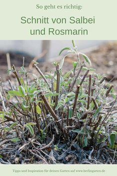 Types Of Mulch, Types Of Plants, Salvia, Hydroponic Gardening, Gardening Tips, Flowers Perennials, Planting Flowers, Small Gardens, Outdoor Gardens