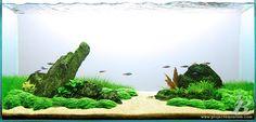planted aquarium - Google Search