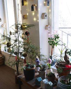 La maison prend doucement des airs de Noël. Les déco de Noël se mélangent aux plantes vertes. - Cette année, nous n'avons pas investi dans un super sapin, un norman qui ne perd pas ses plumes. J'ai coupé celui-là dans une forêt. Je réfléchissais à en acheter un vrai, mais depuis que j'ai lu l'article sur les sapins de Noël dans le dernier Télérama qui expliquait les conséquences écologiques... j'ai dit à quoi bon ! Il est peut-être malingre, mais il fera l'affaire. - La minute bobo 🤓… Turbulence Deco, Minute, Dit, Norman, Ladder Decor, Christmas, Home Decor, Xmas, Green Plants