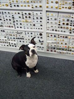 Swatch, the Mood Fabrics dog... not a designer, but significant enough in the fashion world to count on this board ;)