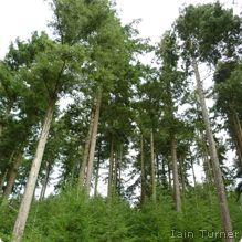 http://www.nwf.org/wildlife/wildlife-library/plants/douglas-fir.aspx