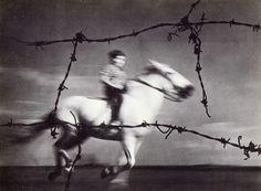pedro luis raota - Liberty is sauvage