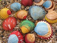 Painted shells for balcony?  retro postcards painted for elevator?.