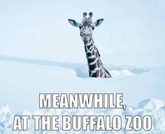 Meanwhile, at the Buffalo Zoo
