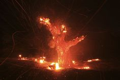 Aug. 7, 2013. Wind-blown embers fly from an ancient oak tree that burned in the Silver Fire near Banning, Calif. Pictures of the Week: August 2 – August 9 - LightBox
