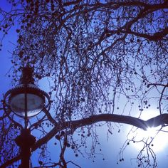 A solitary streetlight under a bare tree on the streets of London.. #streetlight #silhouette #cloud #london #westminster #westminsterbridge #thames #river #capital #wheel #architecture #historic #history #parliament #housesofparliament #government #royalty #landmark #bluesky #clouds #touristattraction #tourist #england #travel