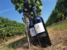 Chateau Lamartine Castillon Cotes de Bordeaux . Hommage Magnum & Bottle . @Chris Fortin 2018 Magnum, Bordeaux, Wine, Bottle, Drinks, Drinking, Flask, Drink, Bordeaux Wine
