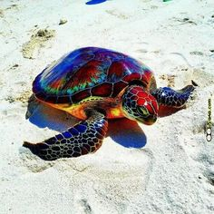 Good looking turtle