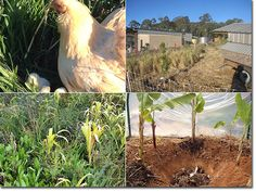 Eagle's Deep Update - The Permaculture Research Institute