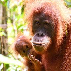 Freu mich sehr, dass siese unglaublich tollen & einzigartigen Bilder jetzt als Kalender erhältlich sind Hawaii, Animals, Europe, Travel Report, Africa, Calendar, Viajes, Pictures, Animales