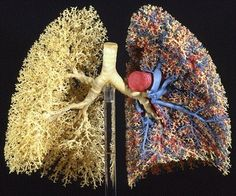 lungs synthesized with fractals.