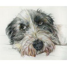 Alma. Farbstiftzeichnung / colored pencil drawing. Auftragsarbeiten / commissioned works: www.hundepersoenl… #dogportrait #tierportrait #art #dogart #animalartist #petportrait