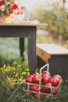 Apple Orchard Wedding Inspiration