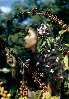 "Woman and Coffee Blossoms - photography by Luis Marden National Geographic 1944  ""Coffee, their 'grain of gold,' looms large in the daily life of the people of El Salvador.… I tasted a liqueur made from coffee beans, saw sheets of plastic made by pressing vellum-like sheaths of the coffee bean with binders, and even sniffed perfume extracted from sweet-scented coffee blossoms.""—Luis Marden"