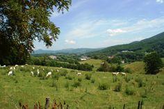 Even the cows enjoy the warm summer sun....