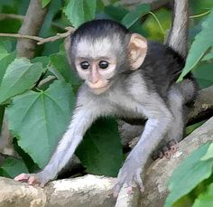 Animals Blog: African Monkeys Review