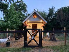 Ranch Farm, The Ranch, Goat Playground, Goat Shelter, Goat Pen, Goat House, Goat Care, Nigerian Dwarf Goats, Barn Animals