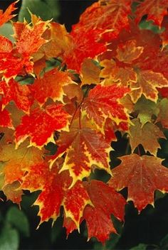 Nice autumn foliage