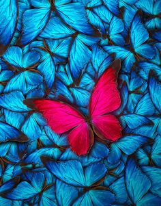Cute Wallpaper: Liven up your space with a beautiful butterfly wall mural. Wall murals from Stic… Fall Wallpaper, Pink Wallpaper, Flower Wallpaper, Mobile Wallpaper, Wallpaper Backgrounds, Blue Butterfly Wallpaper, Butterfly Background, Red Butterfly, Cellphone Wallpaper