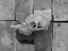 Lamb skull, clay. Meeri Waara art Grey Art, Lamb, Lion Sculpture, Skull, Skulls, Sugar Skull, Baby Sheep