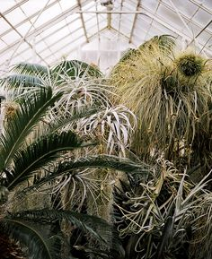 Greenhouse dreams: The taste of Petrol and Porcelain | Interior design, Vintage Sets and Unique Pieces www.petrolandporcelain.com  air plants