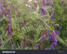 Natural background of meadow flowers.