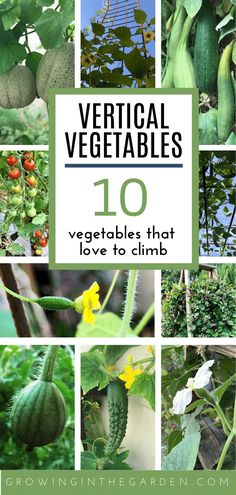 Vertical vegetable gardening saves space, helps avoid pests and disease, makes harvesting easier, and adds beauty to your garden. Olive Garden, Veg Garden, Vegetable Garden Design, Easy Garden, Garden Beds, Vertical Garden Plants, Vertical Vegetable Gardens, Vertical Garden Diy, Vegetable Gardening
