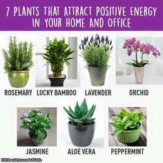 Positive Energy Plants
