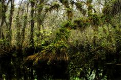 Fakahatchee Strand, Florida by Christopher Evans