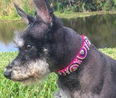 Pink Beaded Dog Collar, Pink Pet Collar, Multicolored Dog Collar, Neon Pink Dog Collar, Beaded Pet C Pink Dog Collars, Pet Collars, Big Dogs, Small Dogs, Beaded Dog Collar, Designer Dog Collars, Girl And Dog, Dog Leash, Day Use