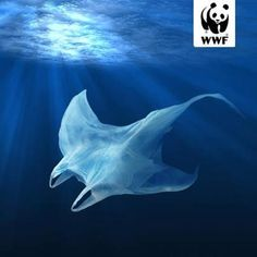 Publicité - Creative advertising campaign - WWF: Each year, plastic pollution kills more than 100 000 marine creatures Save Planet Earth, Save Our Earth, Save The Planet, Ocean Pollution, Plastic Pollution, Water Pollution Poster, Creative Advertising, Urban Outfitters France, What Is Fashion Designing