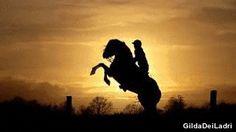 (10) horse gif   Tumblr A BLACK HORSE