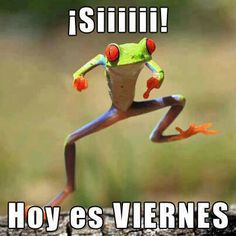 viernes - Memes And Humor 2020 Spanish Posters, Spanish Jokes, Spanish 1, Learn Spanish, Spanish Class, Funny Frogs, Cute Frogs, Spanish Lesson Plans, Spanish Lessons