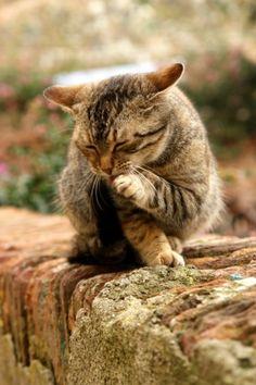 Топ 10 поведенчески проблеми при котката (5 част)