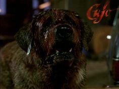 Cujo! - Good dog :-)