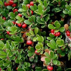 28 Best VCI Greenscape images in 2015 | Plants, Garden, Home