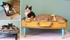 re-purposed cat bed my dog would love that too!
