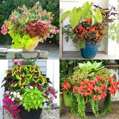 Best Shade Plants & 30+ Gorgeous Container Garden Planting Lists - A Piece Of Rainbow