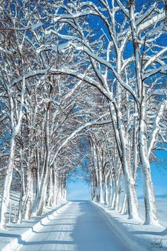 Winter Trees, Wonders Of The World, Winter Wonderland, Norway, Paths, Art Photography, Beautiful Places, Scenery, Around The Worlds