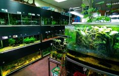 #WarehouseAquatics place to shop aquatic products such as Heating Equipment, Pond Filters & Pumps and much more and get discounts and offers at #VoucherBucket  https://www.voucherbucket.co.uk/stores/warehouse-aquatics/