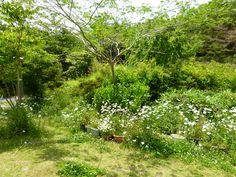 """Giardino, """"Yamabiko"""" (Soba-Osteria), Shuzenji Shizuoka Japan (Giugno)"""