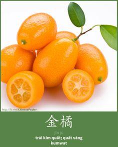 金橘 - jīn jú - Kim quất - Kumwat