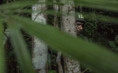 Soldado durante curso de guerra na selva executado pelo Centro de Instrução de Guerra na Selva do Brasil. Foto: Mauricio Lima /The New York Times