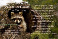 Animal Spirit Guide : The Raccoon