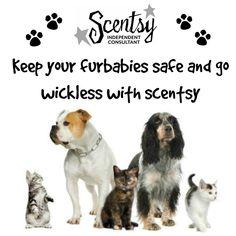 Scentsy is safe for Pets!   Lindseyclark.scen...