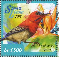 Crimson Sunbird stamps - mainly images - gallery format