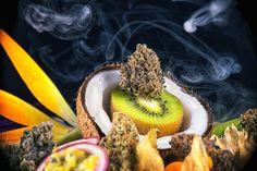 Dat 'wondermiddel' wietolie tegen veel ziekten werkt, is allesbehalve toeval of een placebo-effect. Het is een bewezen reactie van ons lichaam op cannabis.