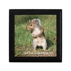 Eastern Gray Squirrel trinket box